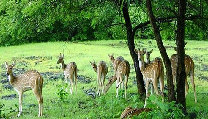 Sariska National Park Alwar