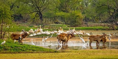 full day agra tour with bharatpur bird santuary