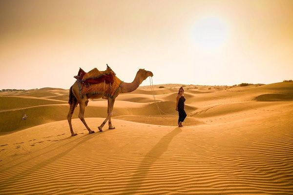 one hour camel safari tour