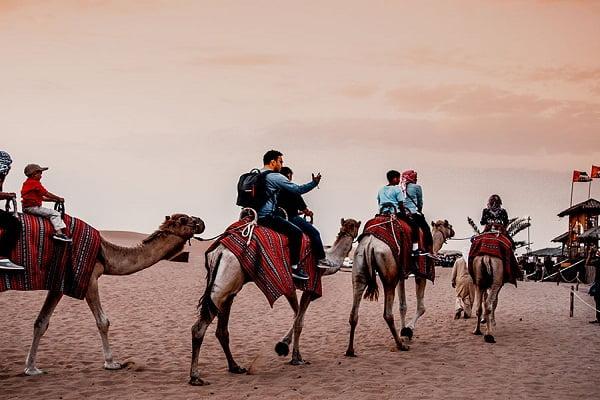premium camel safari